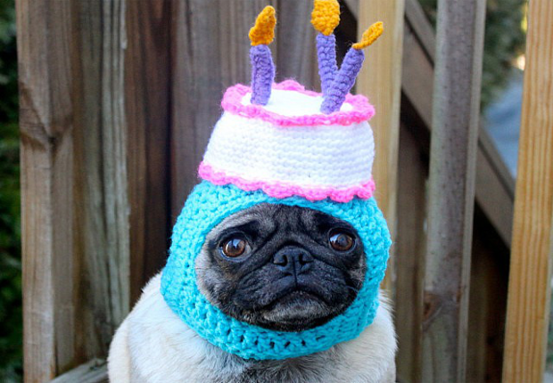 Amusing Dog Hats