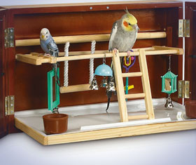 Bird Activity Center