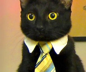 Cat Neck Tie