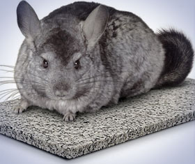 Chinchilla Chiller Stone