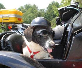 Doggie Helmet