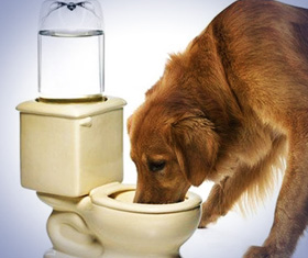 Toilet Drinking Bowl