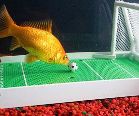 Goldfish Soccer