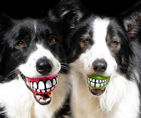 Smiling Teeth Dog Ball